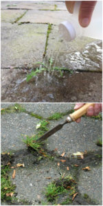 decorative concrete weed removal